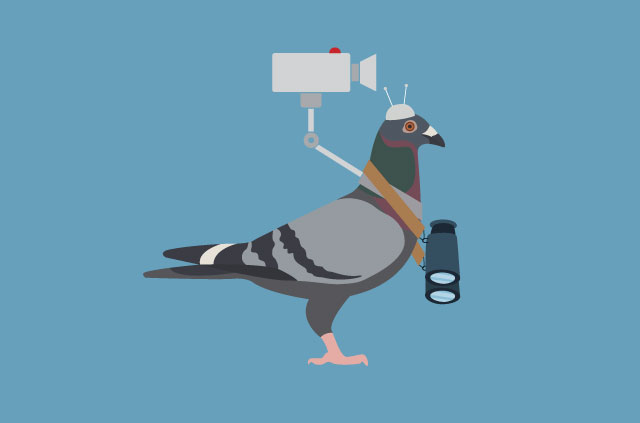 A pigeon with a pair of binoculars.